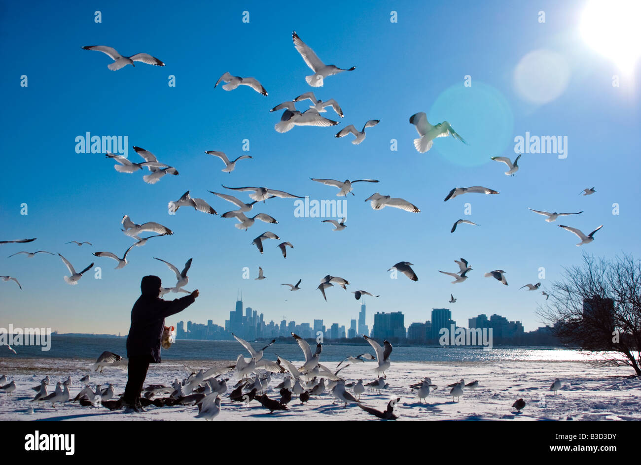 Man feeding seagulls by sea with cityscape in background - Stock Image