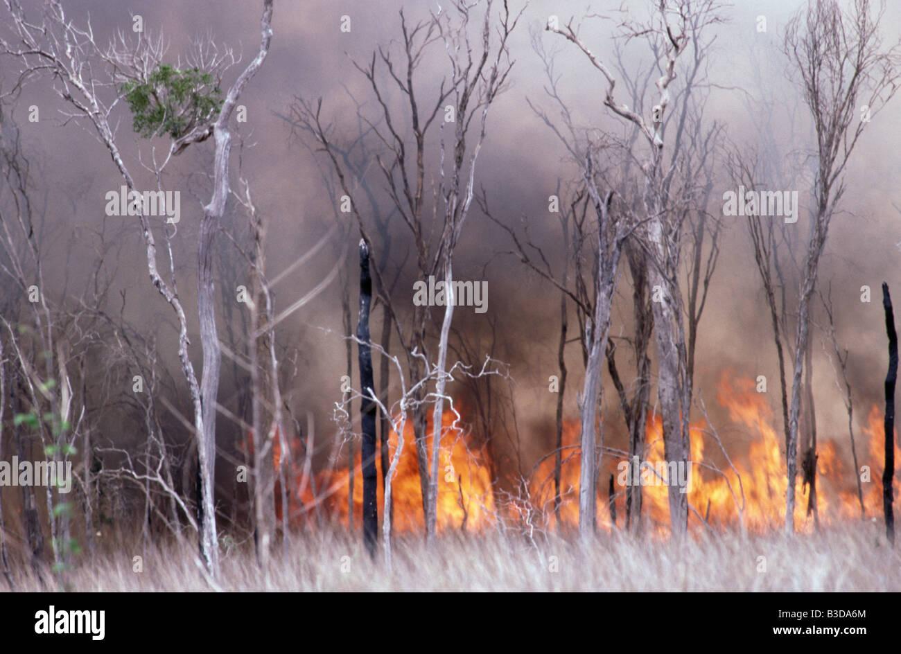 feu de forets BURNING FOREST FIRE sud south MADAGASCAR Africa African blaze blazing burn burned burning burns conflagration - Stock Image