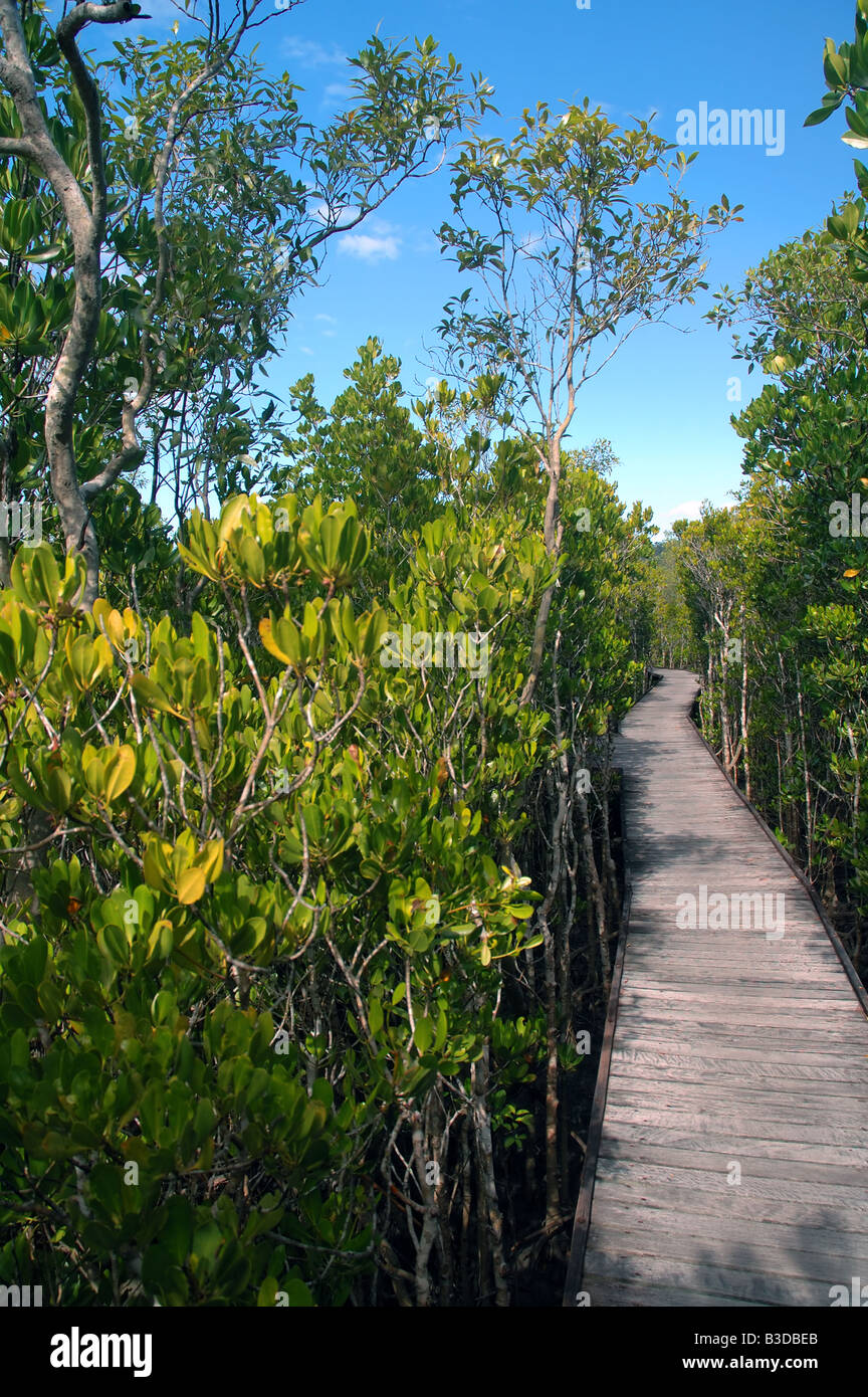 Jack Barnes Bicentennial mangrove boardwalk within the grounds of Cairns Airport Queensland Australia RW - Stock Image