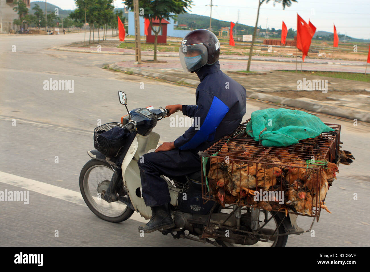 Person riding a moped carrying caged chickens to the local market in Hanoi, Vietnam, Asia - Stock Image