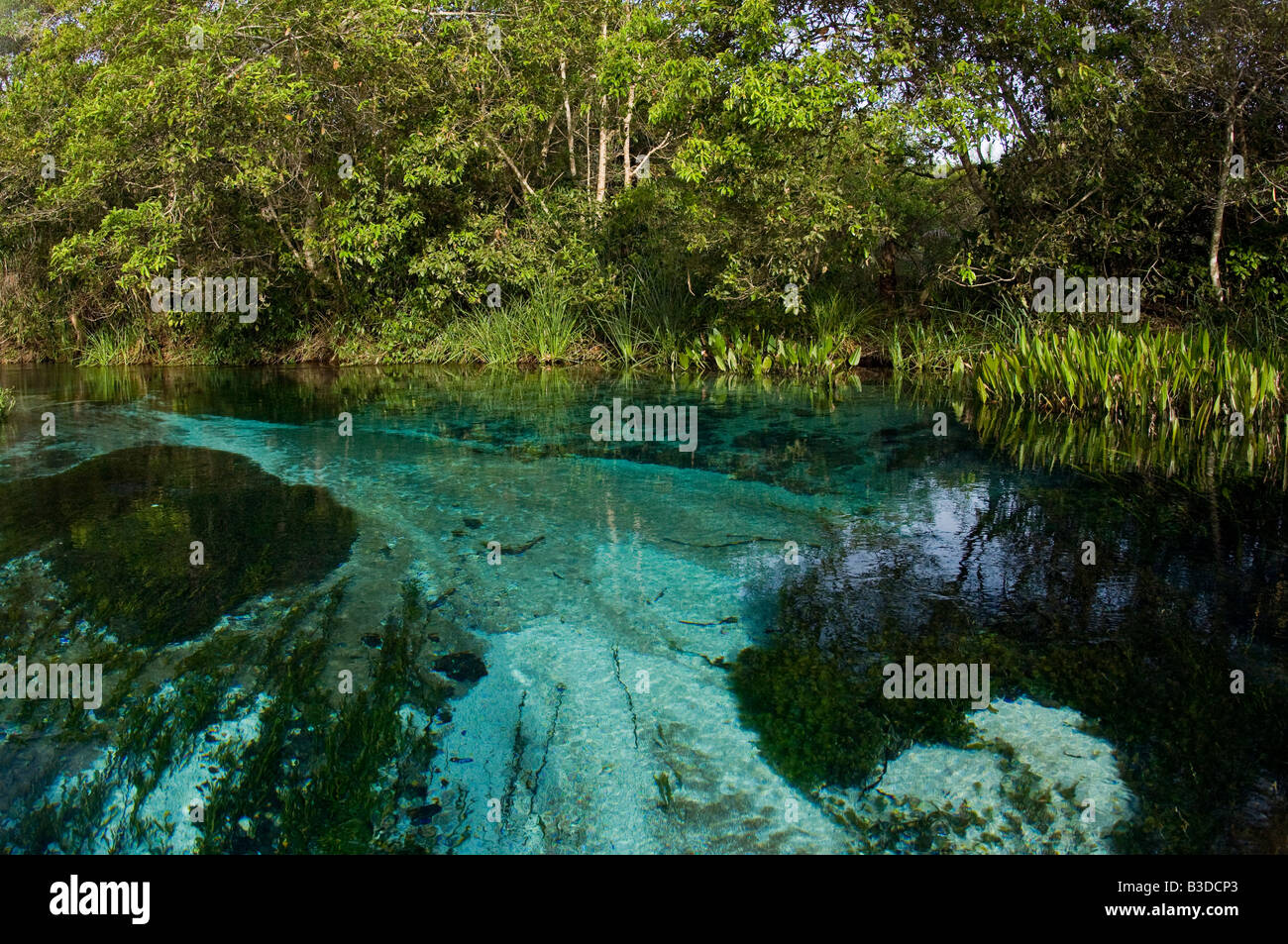 Crystal clear river in a region of Mato Grosso do Sul, Brazil - Stock Image
