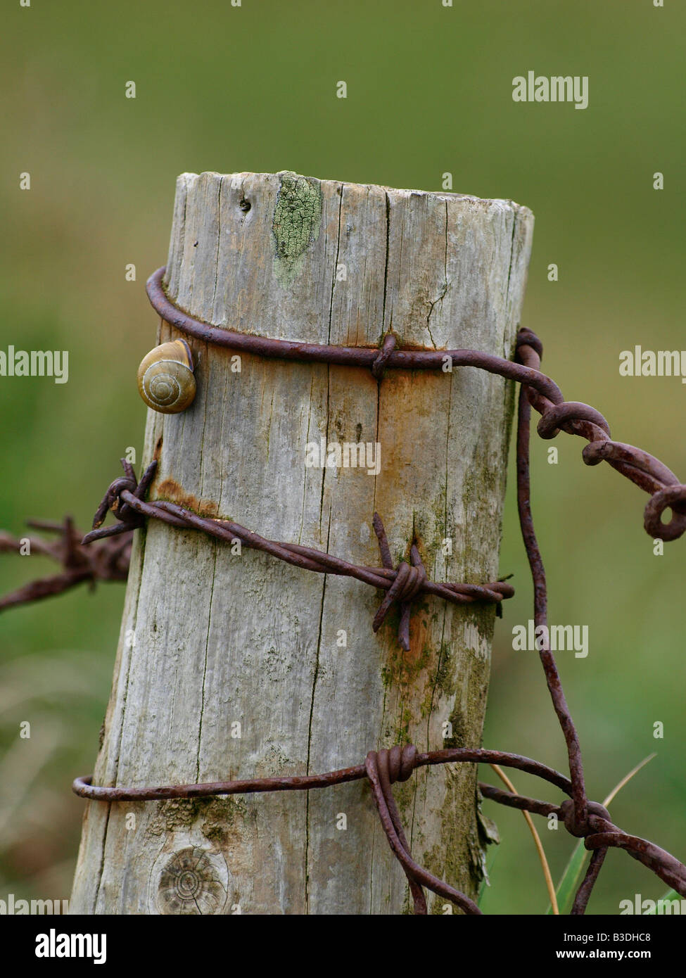 Old fence post with rusty barb wire and a snail Stock Photo ...