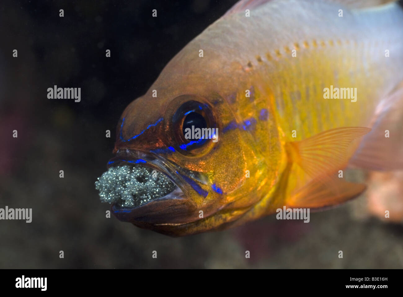 Fish Eggs Hatching Stock Photos & Fish Eggs Hatching Stock