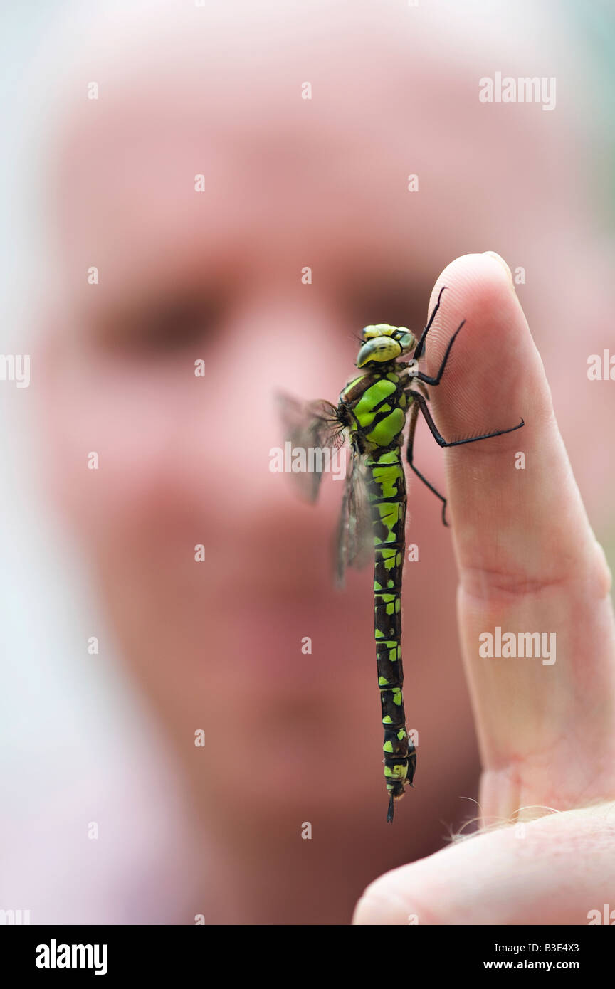 Man with Southern Hawker Dragonfly resting on his finger - Stock Image
