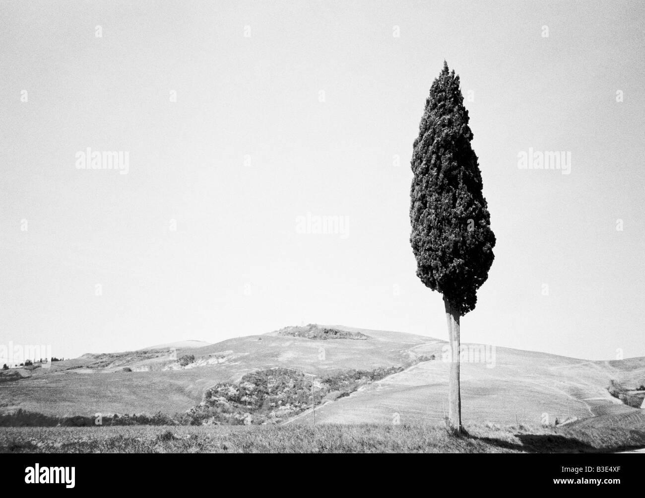 Tuscany Italy black & white landscape with a single tree - Stock Image