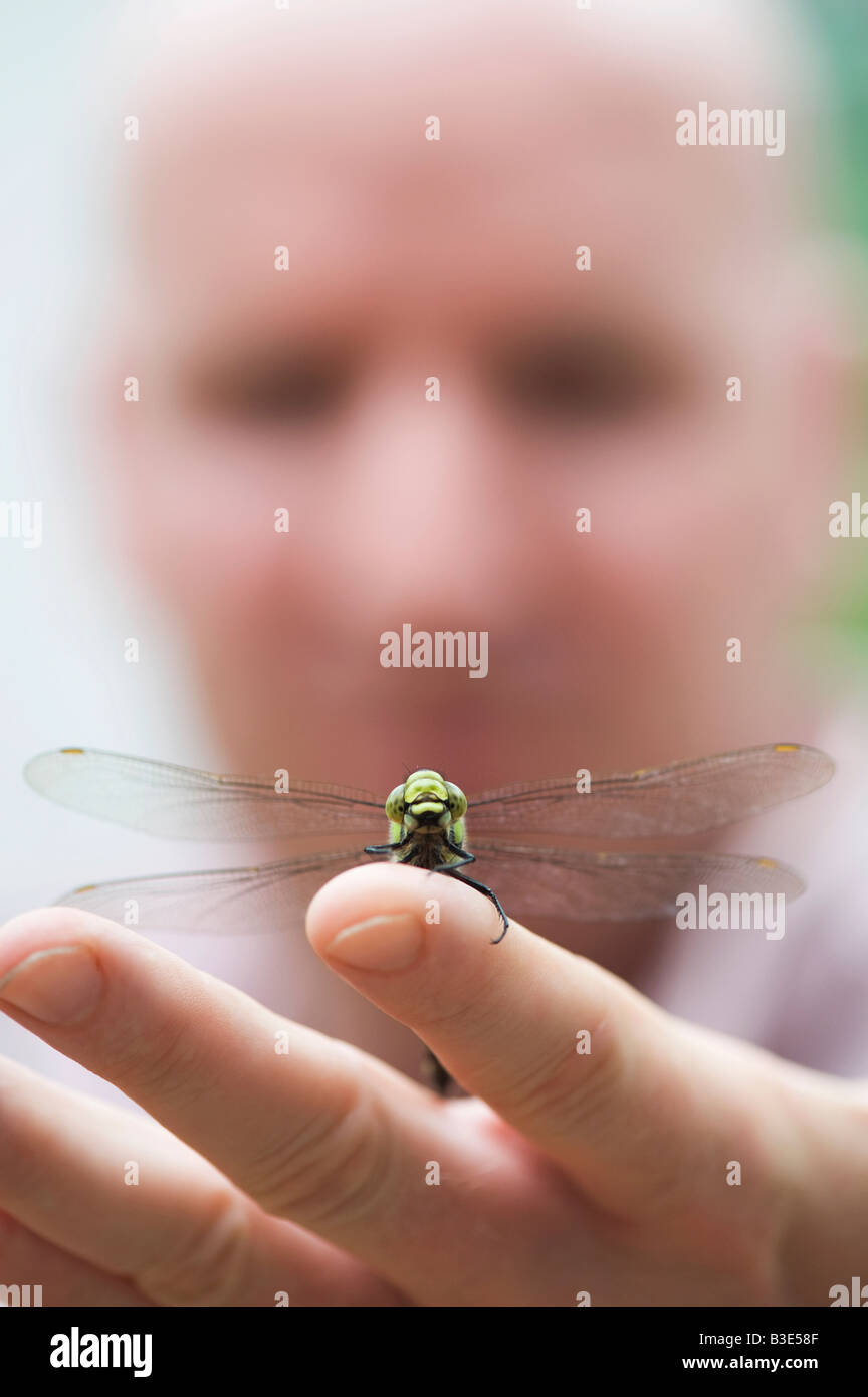 Man with Southern Hawker Dragonfly resting on his hand - Stock Image