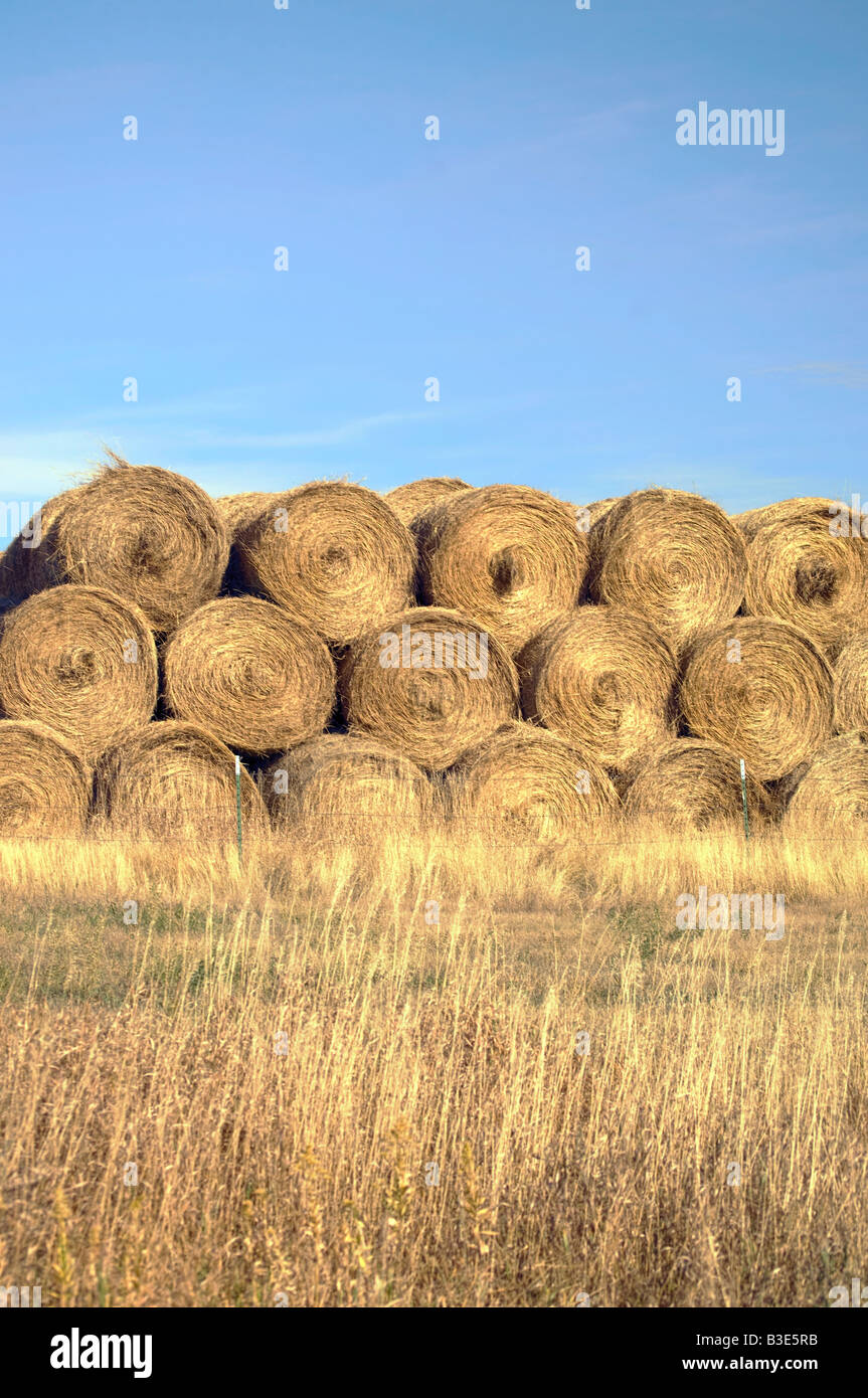 Bales of wheat in a North Dakota field - Stock Image