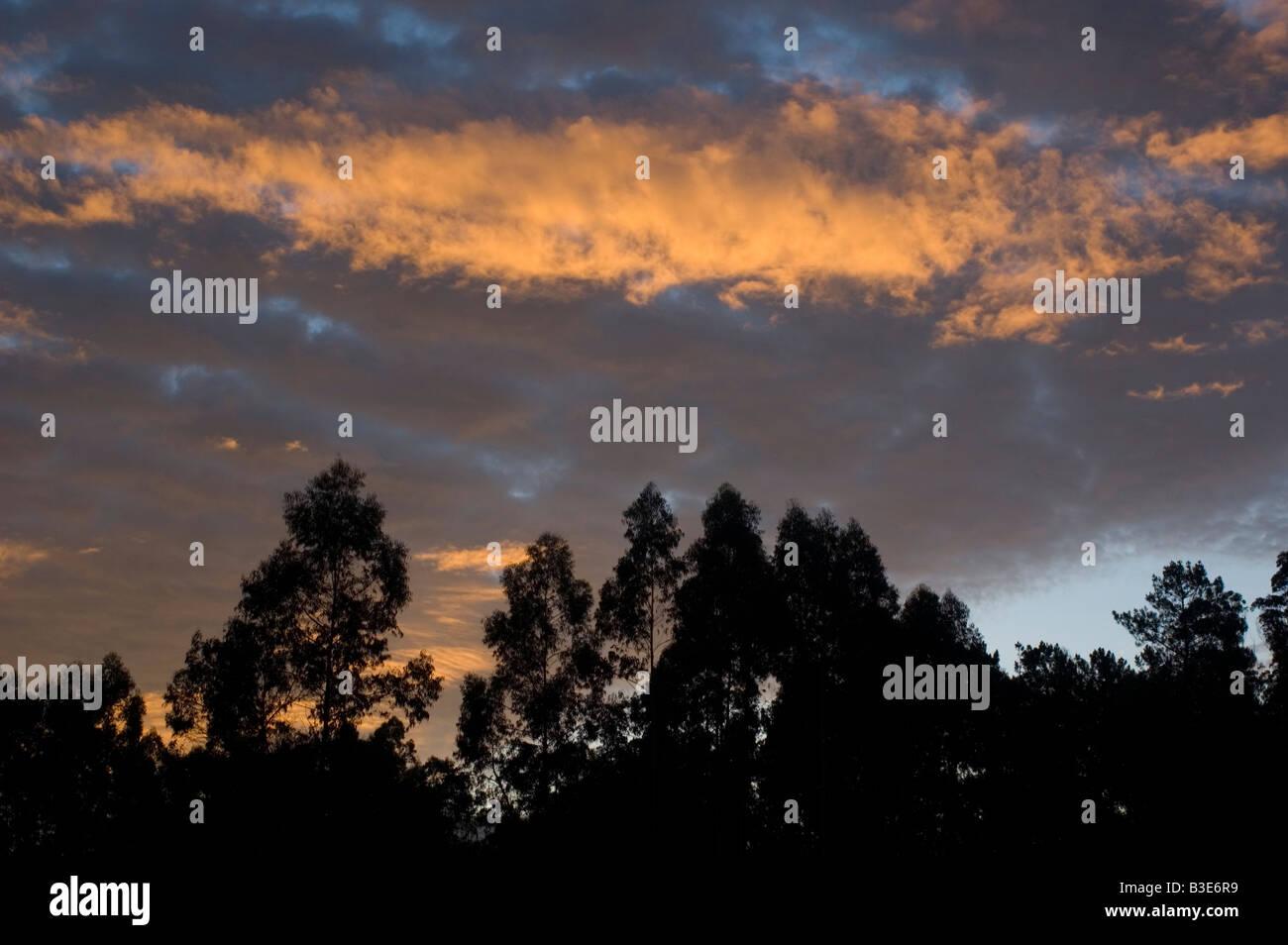 WAY OF SAINT JAMES or CAMINO DE SANTIAGO -  GALICIA region SPAIN - Stock Image