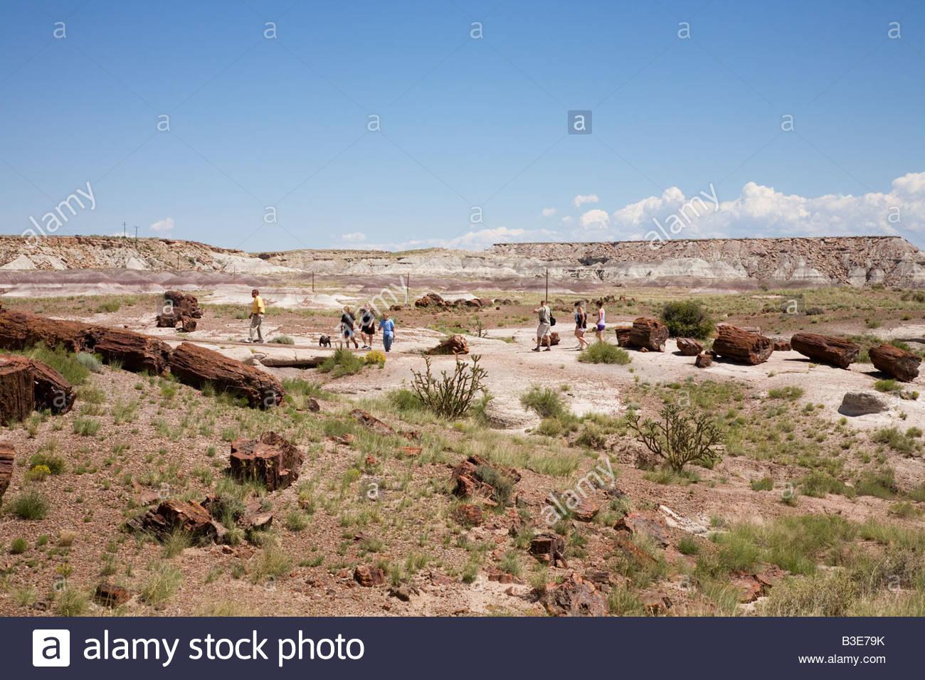 Visitors walking on Gaint Logs Trail Petrified Forest National Park Arizona - Stock Image