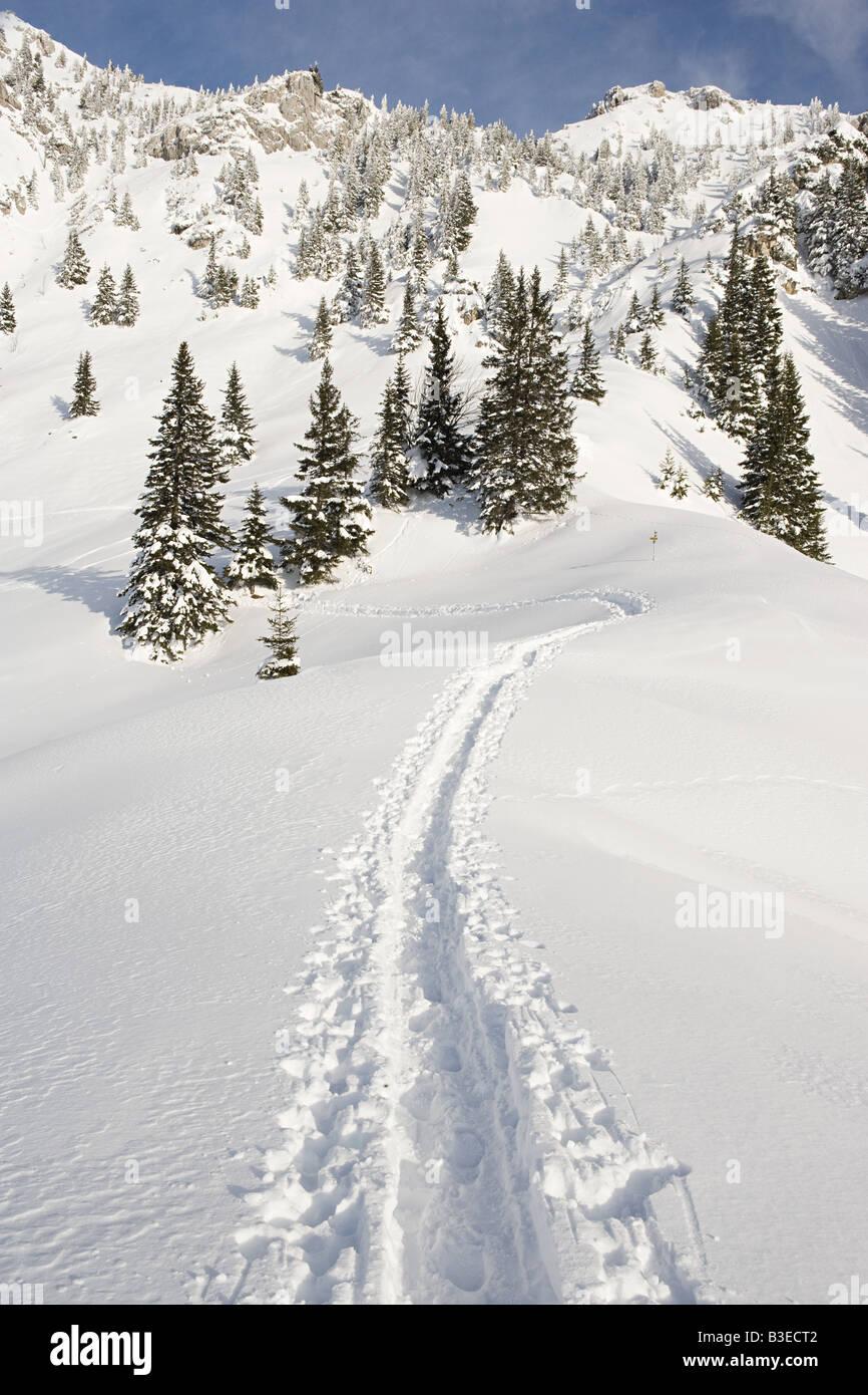 Tracks in snow - Stock Image