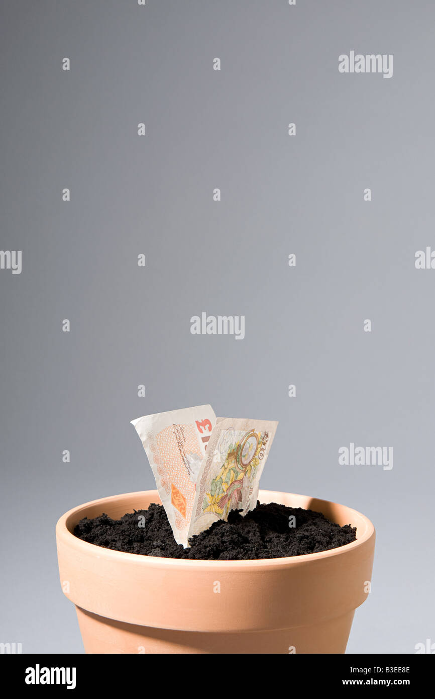 Ten pound note growing from pot - Stock Image