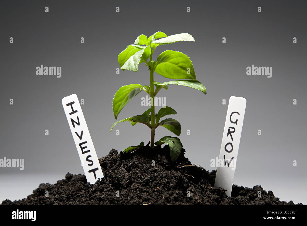 Sapling with investment labels - Stock Image