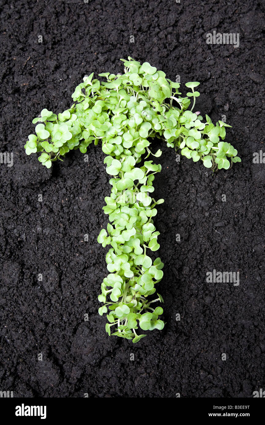 Saplings in the shape of an arrow - Stock Image