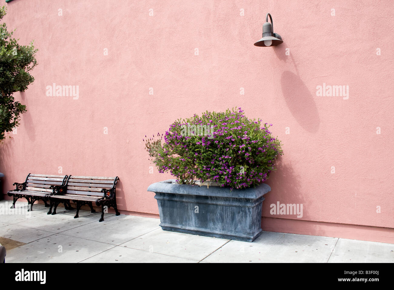 Peachy Small Bush In A Planter Underneath A Light Next To A Bench Pabps2019 Chair Design Images Pabps2019Com