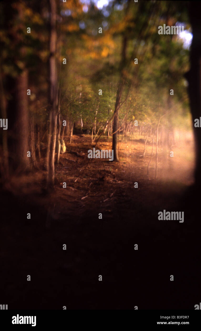 an eerie, mysterious wooded landscape - Stock Image