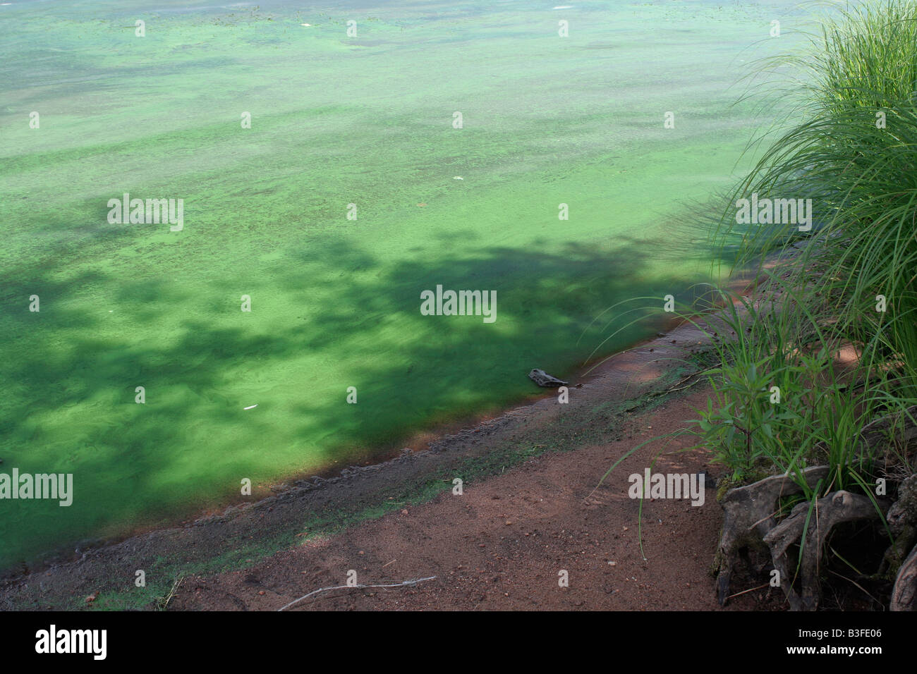 Eutrophication effects on the ecosystems in the Wisconsin river - Stock Image