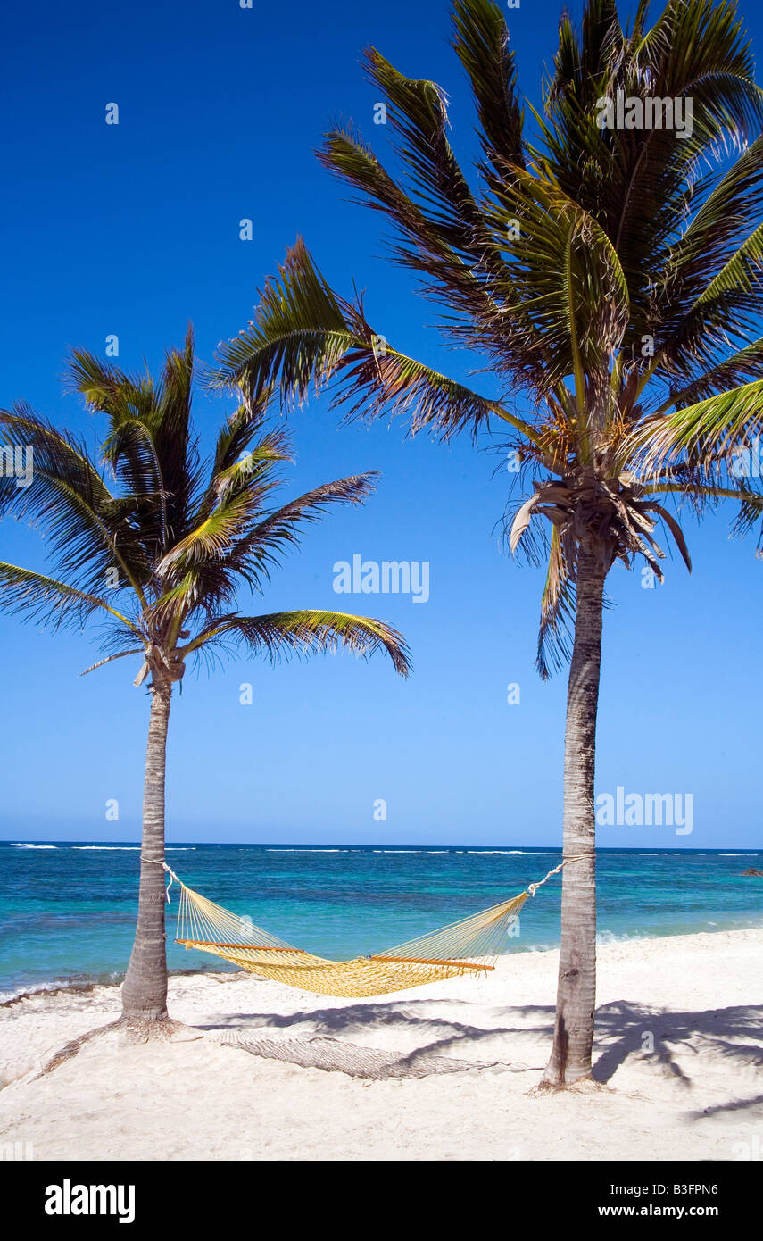 Hammock slung betweeen Coconut Palms overlooking the reef in the Caribbean. what bliss! - Stock Image