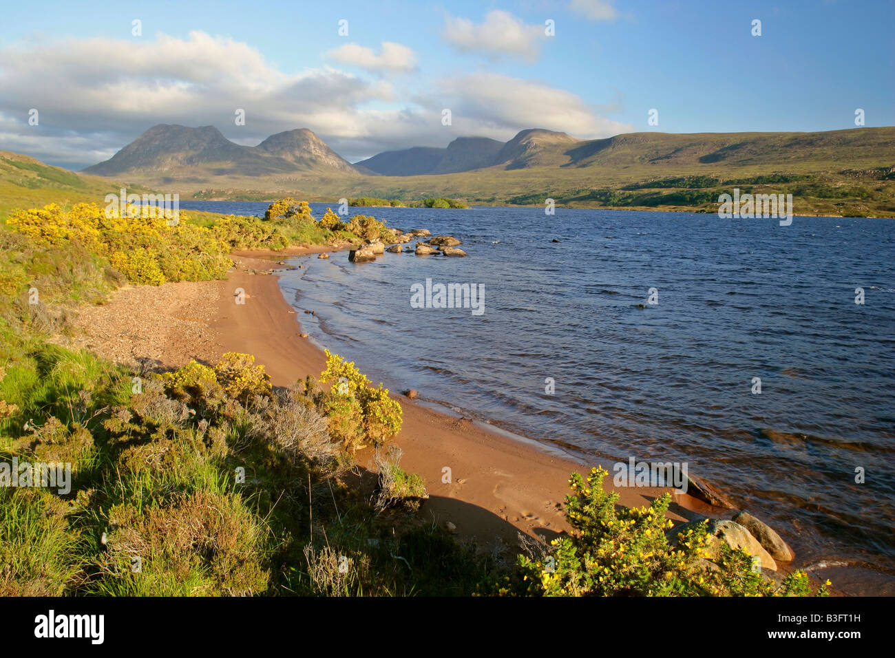 scenery view from the shores of Loch Lurgainn towards Cul Beag and Beinn an Eoin with blooming gorse near Inverpolly Stock Photo