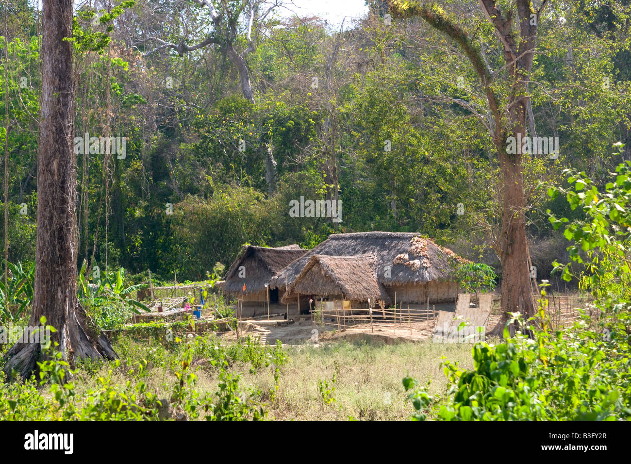 farmhouse in the forest andaman india - Stock Image