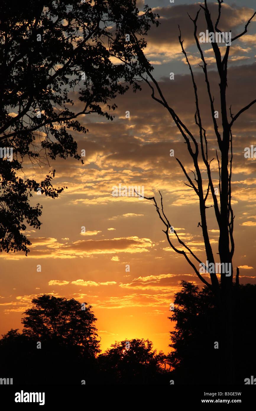 Luangwa Sunset - Stock Image