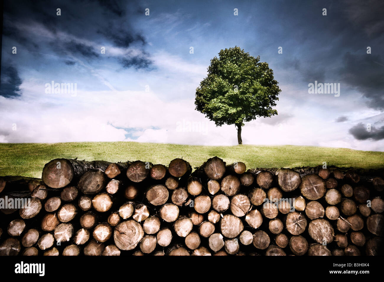 a lone tree behind a log pile - Stock Image