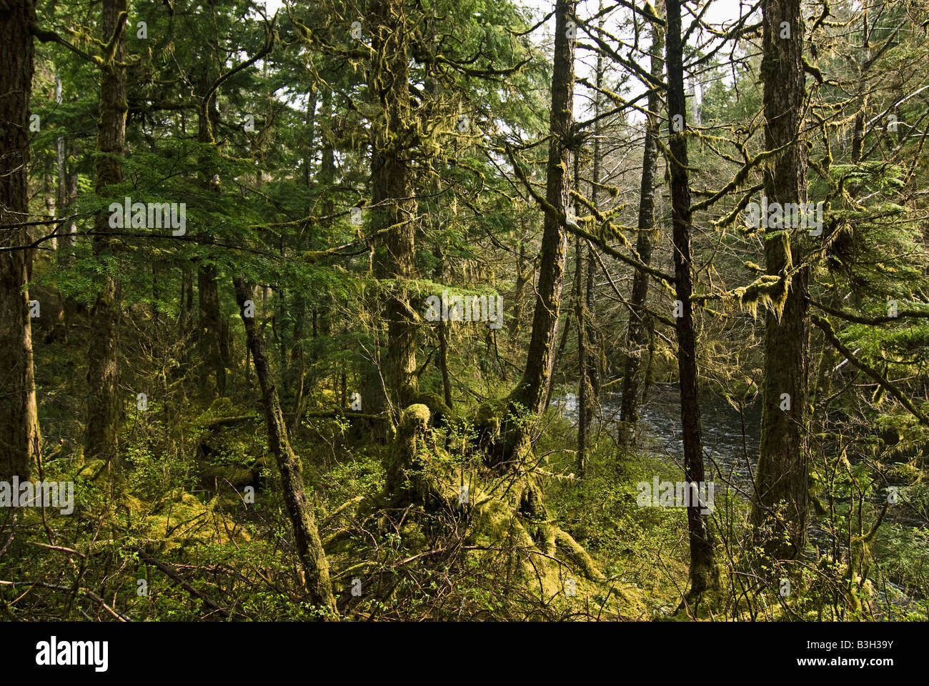 Alaska, Ketchikan, Tongass National Forest - Stock Image
