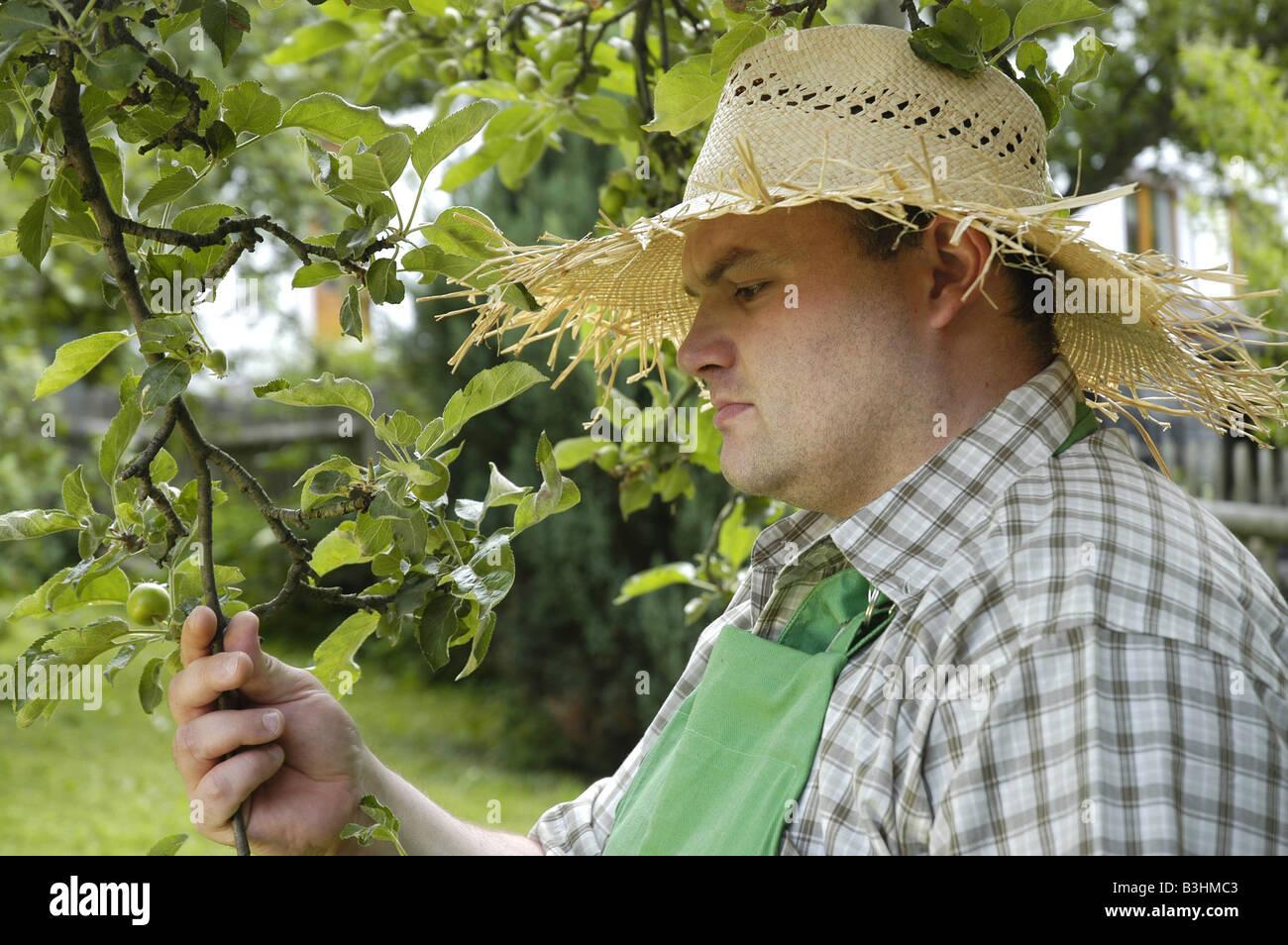 gardener at work - Stock Image