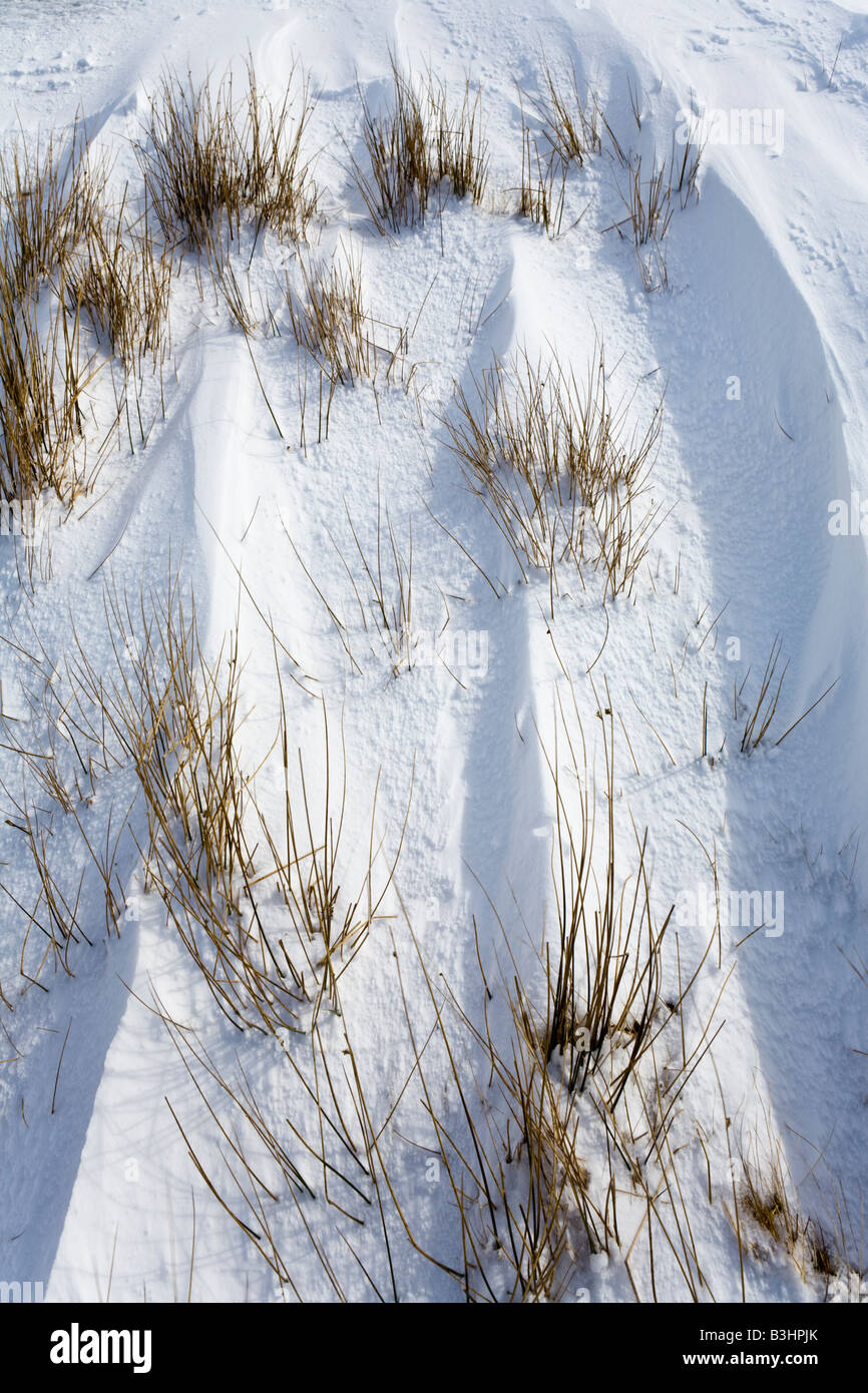 Reeds showing through wind blown snow in Glen Clunie, south of Braemar, Aberdeenshire, Scotland - Stock Image
