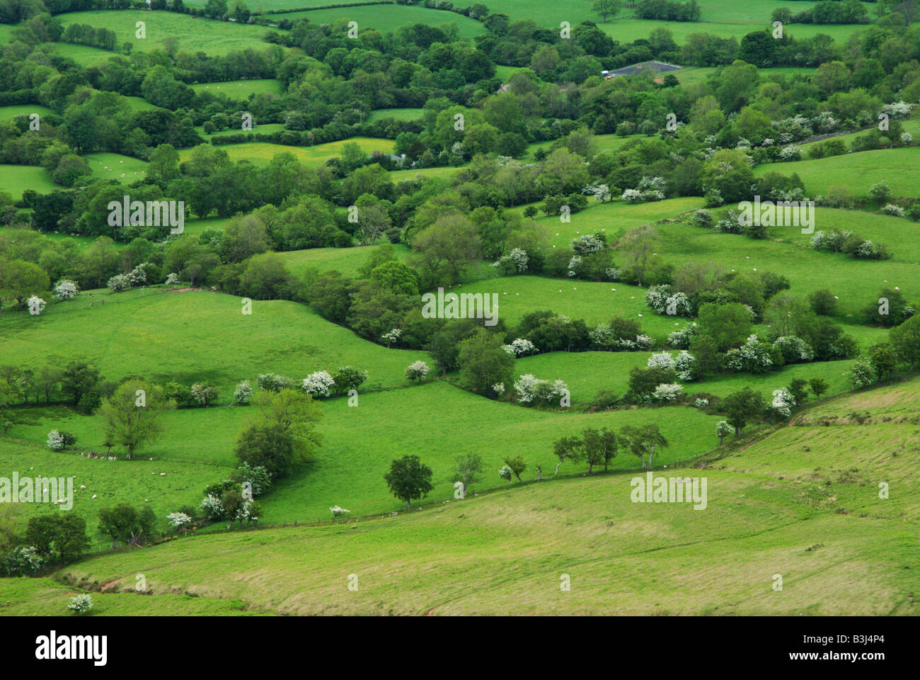 The view of fields from the high moor above the tiny fields in the Welsh Border Country along Offa's Dyke near - Stock Image