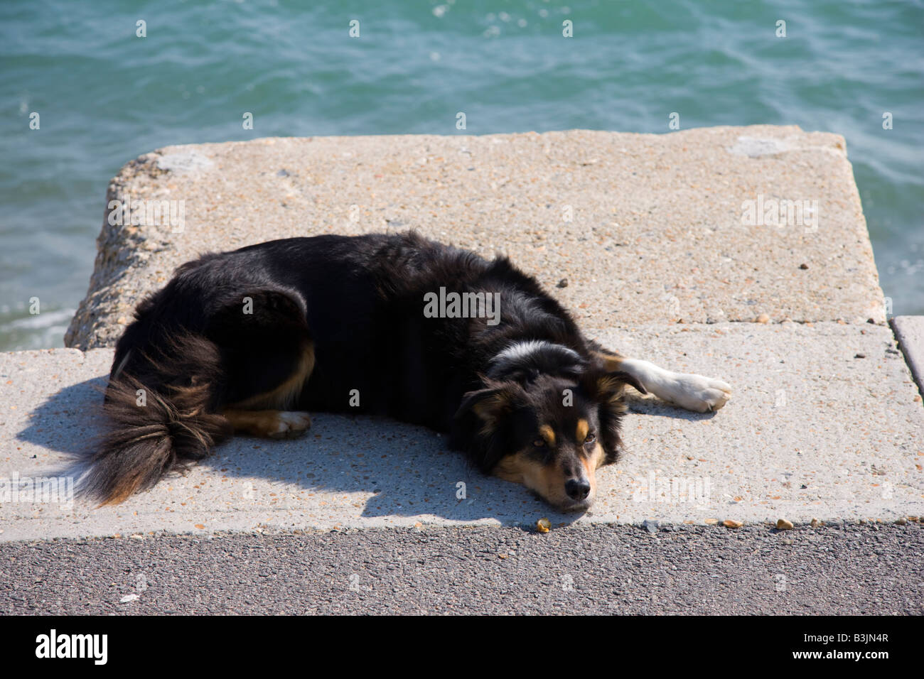 Dog resting on the seafront promenade - Stock Image