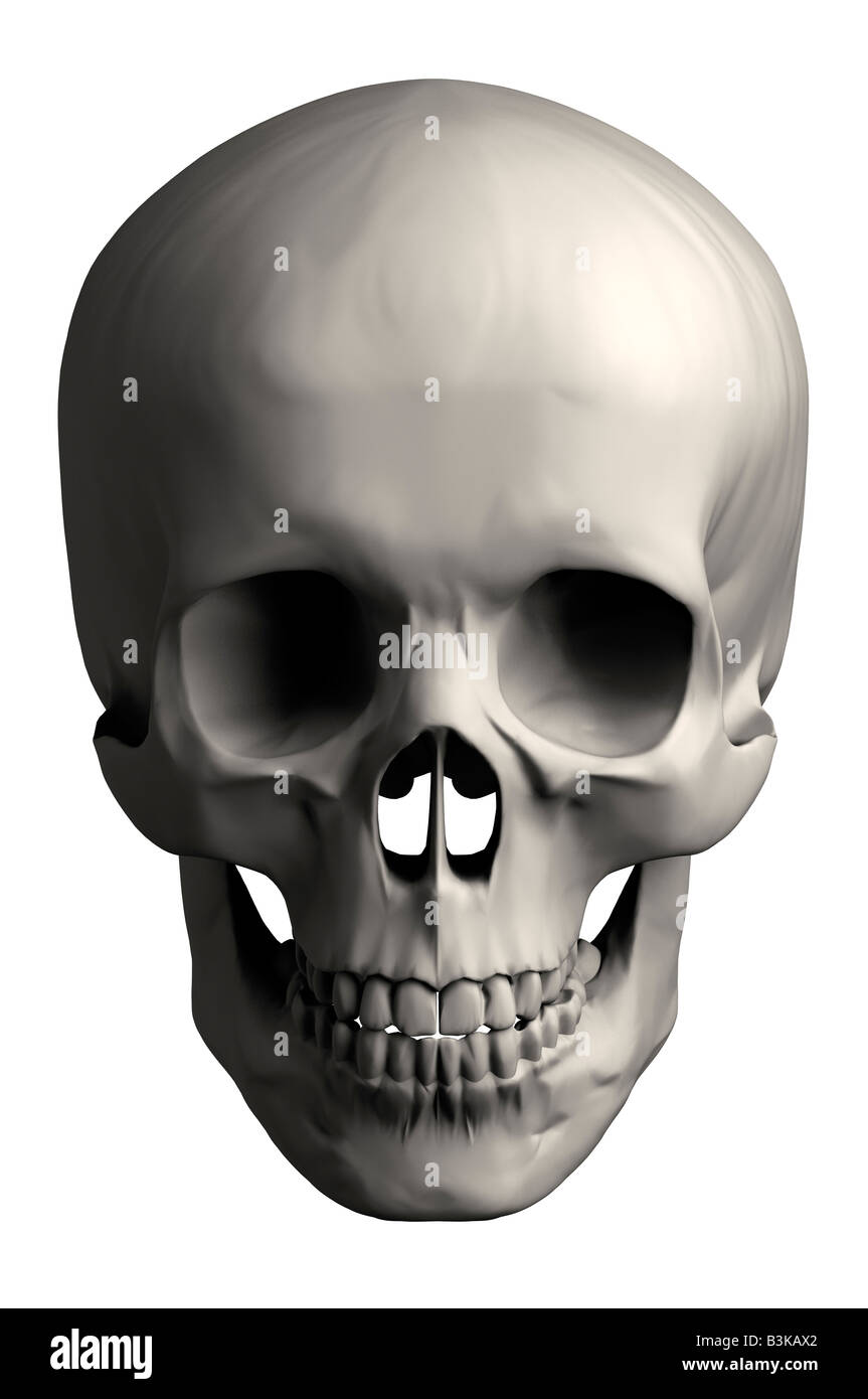 Human skull front view stock photo 19479994 alamy human skull front view ccuart Images