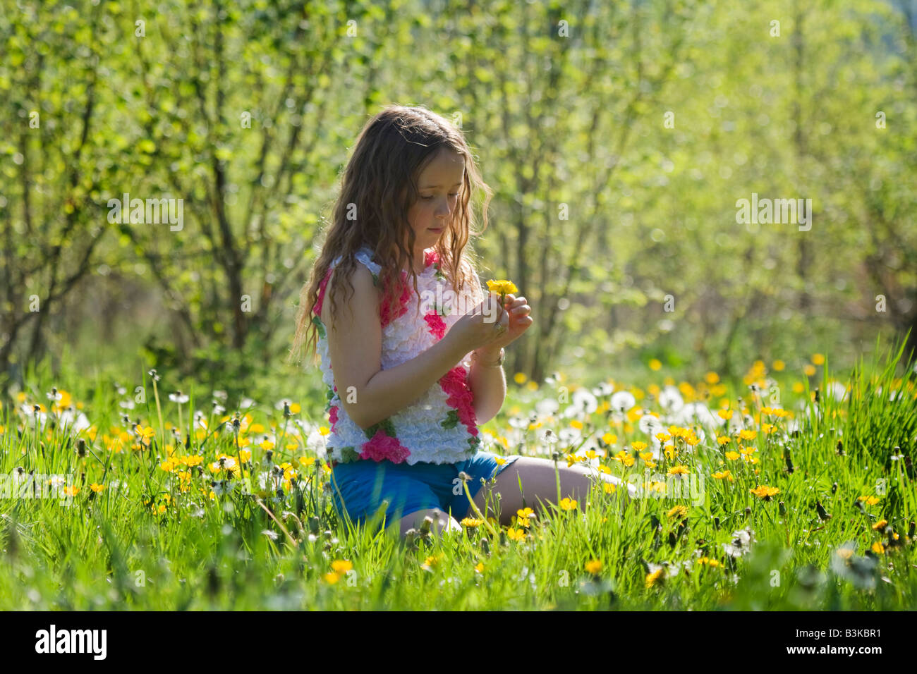 young girl sits among the dandelions on a summer day - Stock Image