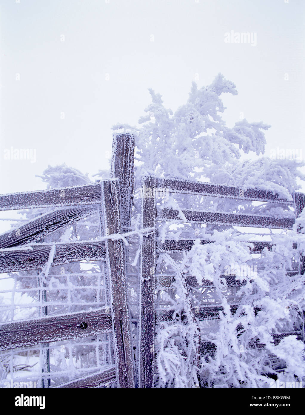 Fence with hoar frost Near Maupin Oregon - Stock Image