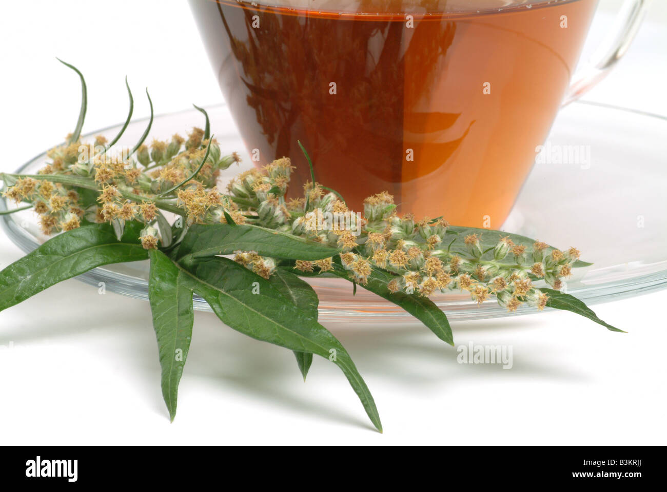 Medicinal herb tea and Blossom of the medicinal plant