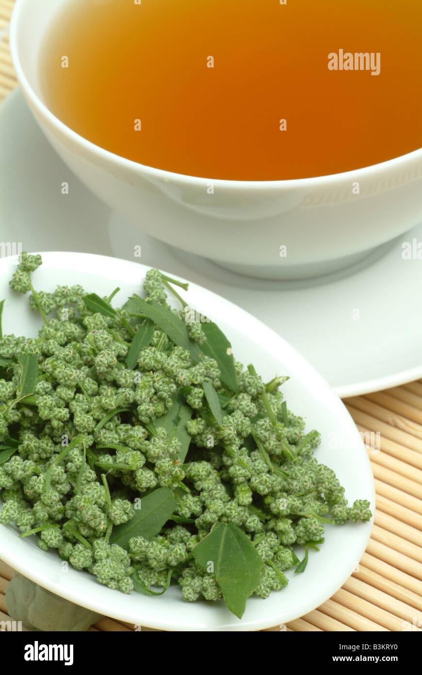 medicinal tea made of mugwort wegwood artemisia artemisia