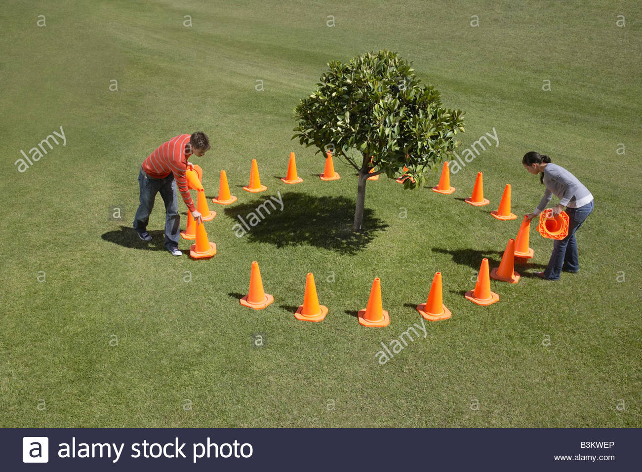 Couple placing traffic cones around tree - Stock Image
