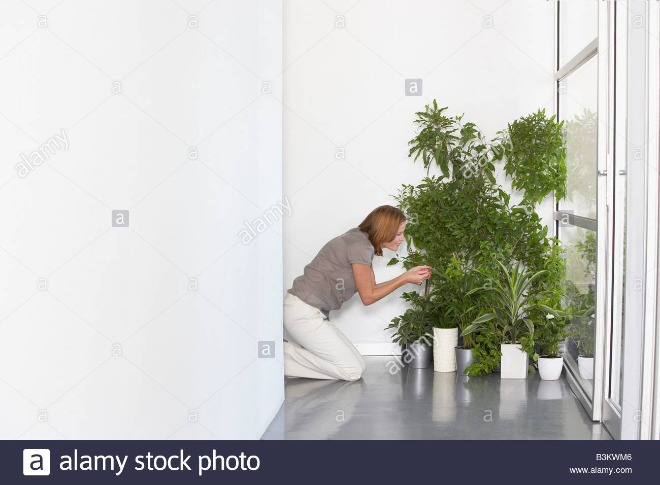 Businesswoman tending plants in office - Stock Image