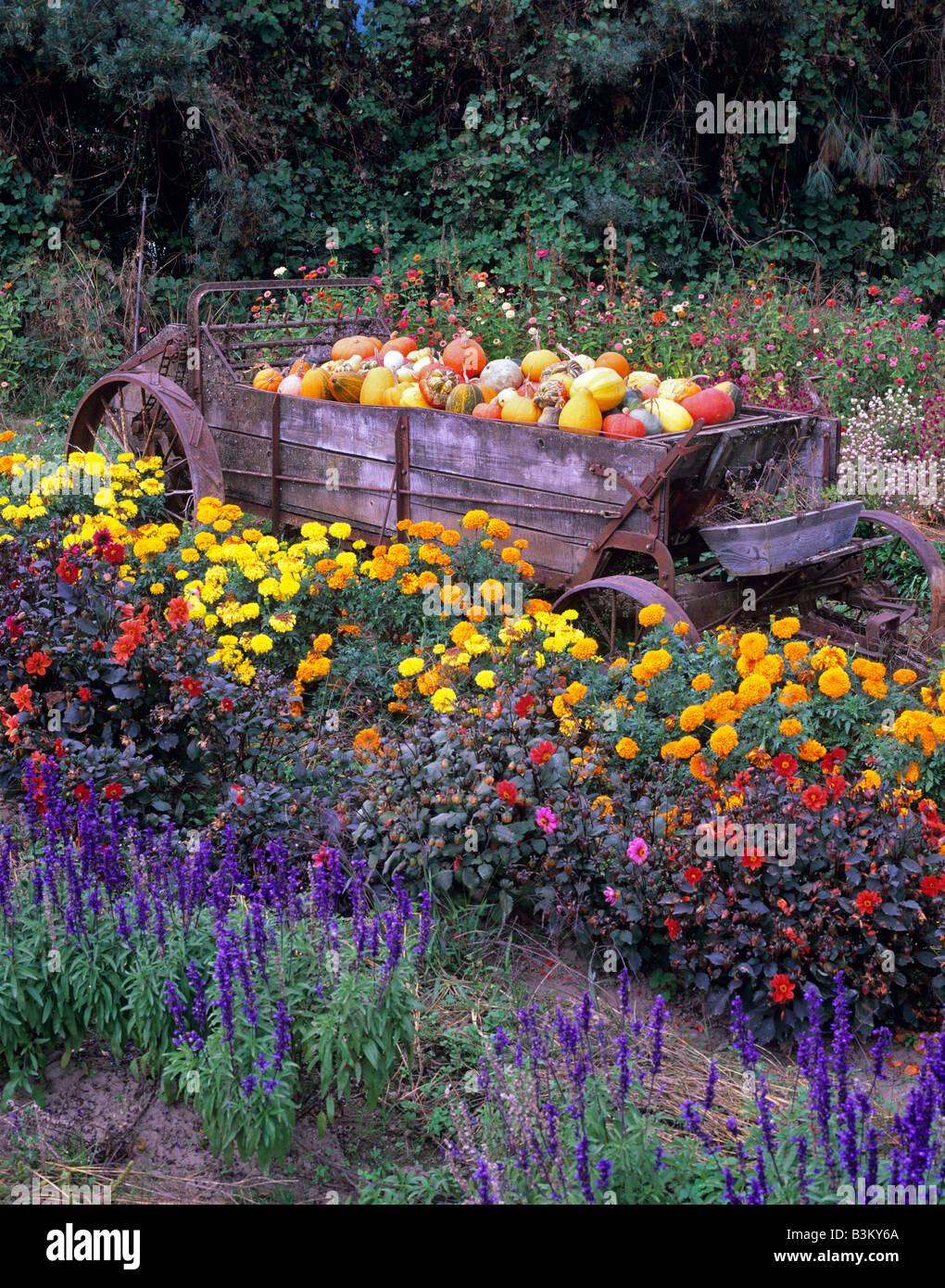 Gords In Wagon In Flower Garden At Herricks Garden Near Springfield Oregon
