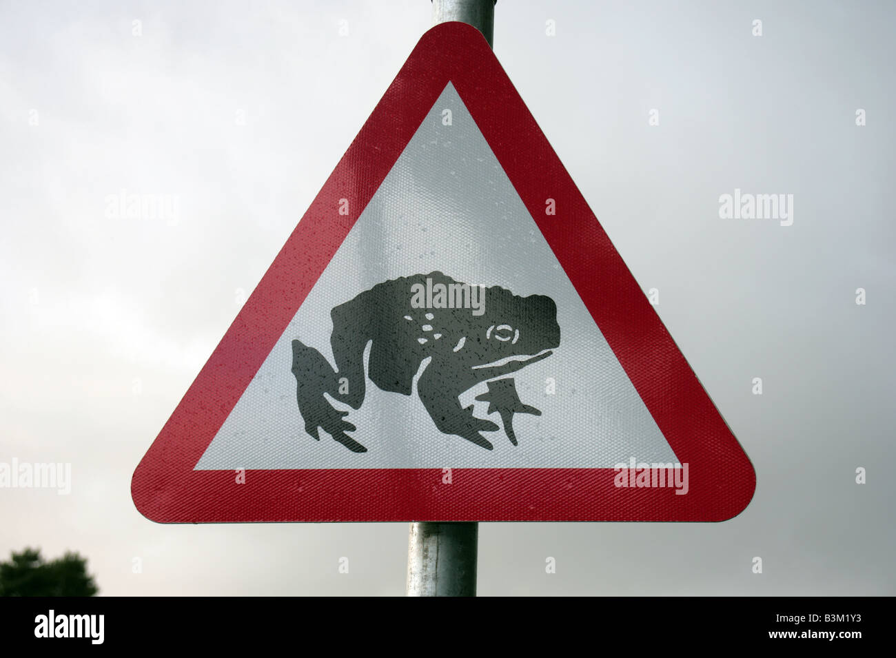 toads crossing warning road sign Machynnleth Wales - Stock Image