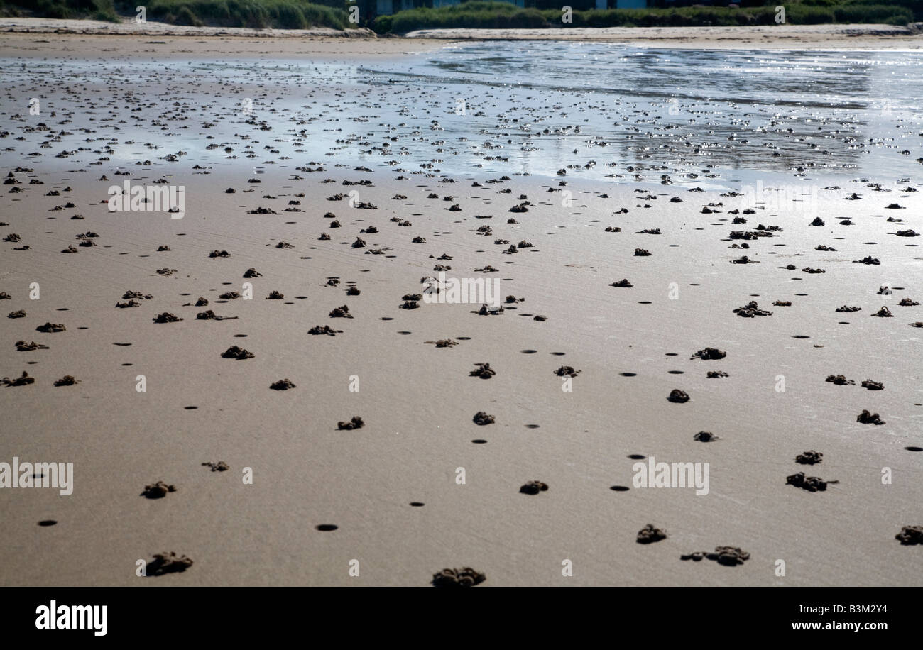 Lugworm casts on the beach at low tide North East of England - Stock Image