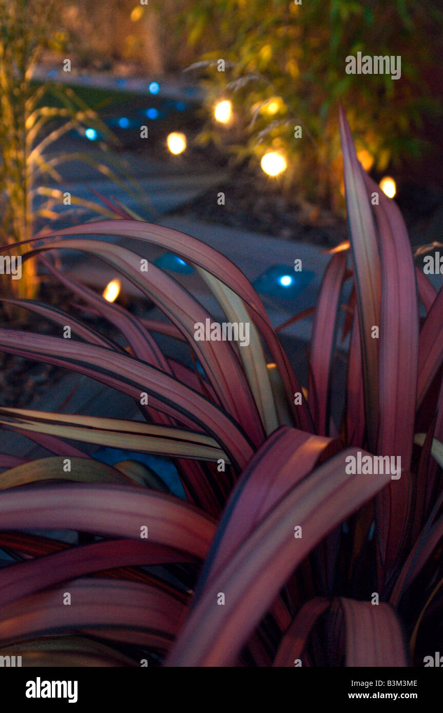 purple blade leaves in lit garden at night Stock Photo