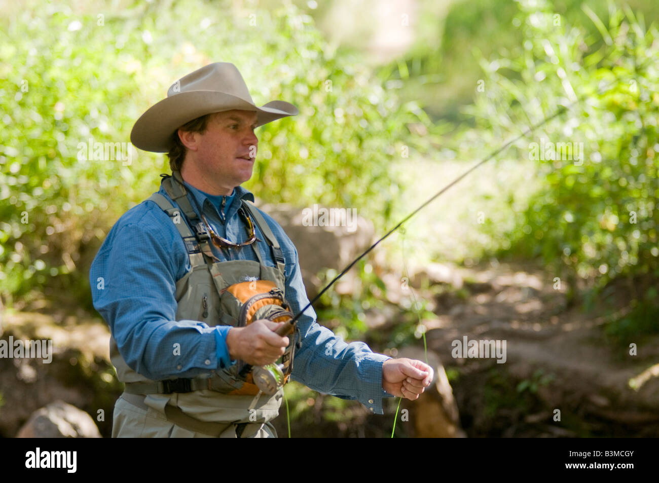 Local resident fly fishes for trout on Gore Creek, Vail, Colorado in August. - Stock Image
