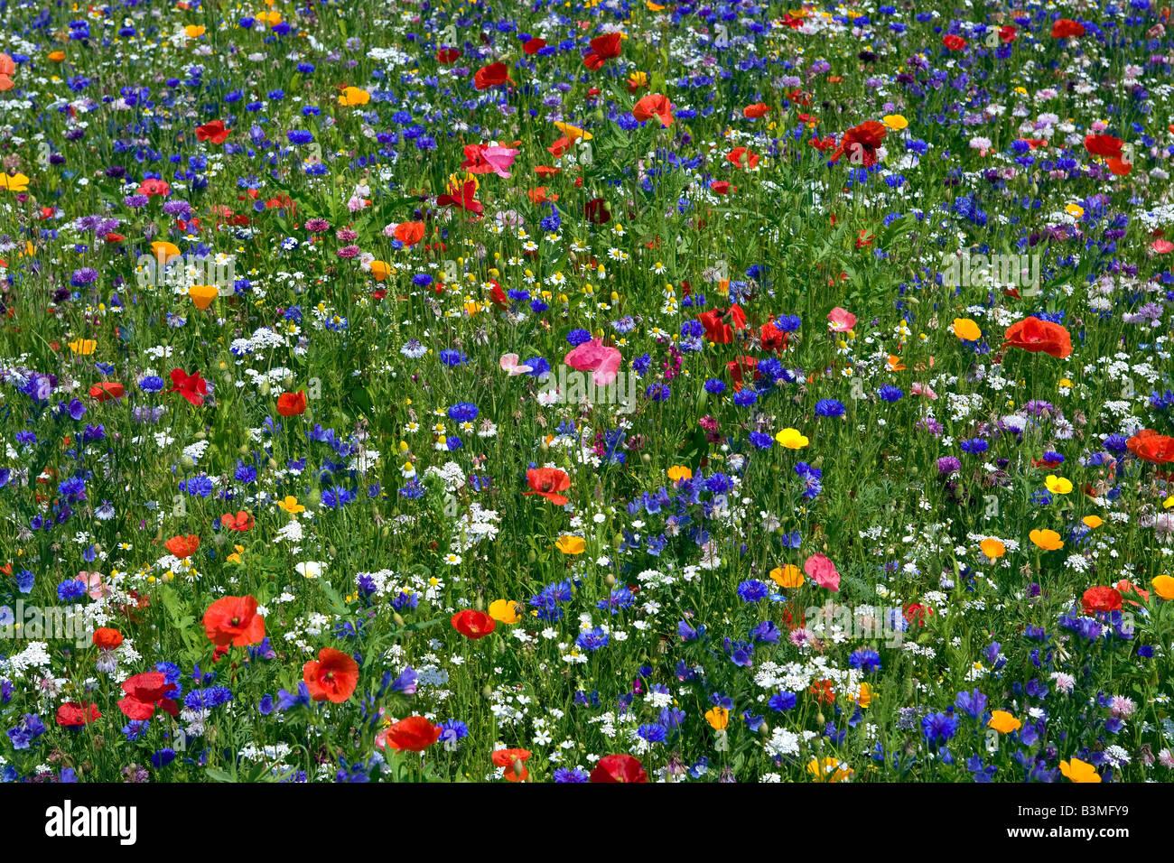 Wild Flowers Fields Stock Photo Alamy