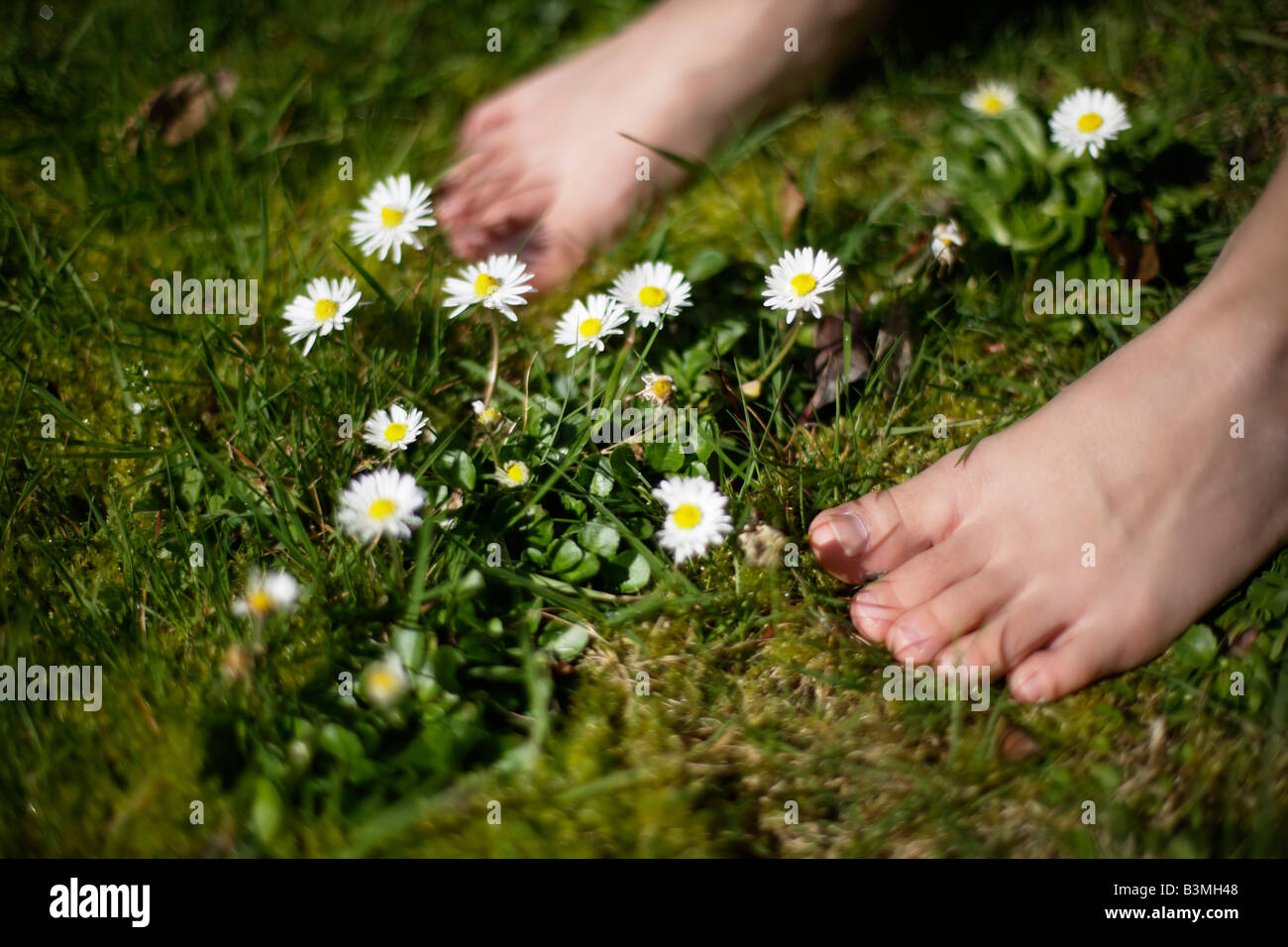 Six year old boy stands barefoot amongst daisies in lawn Stock Photo