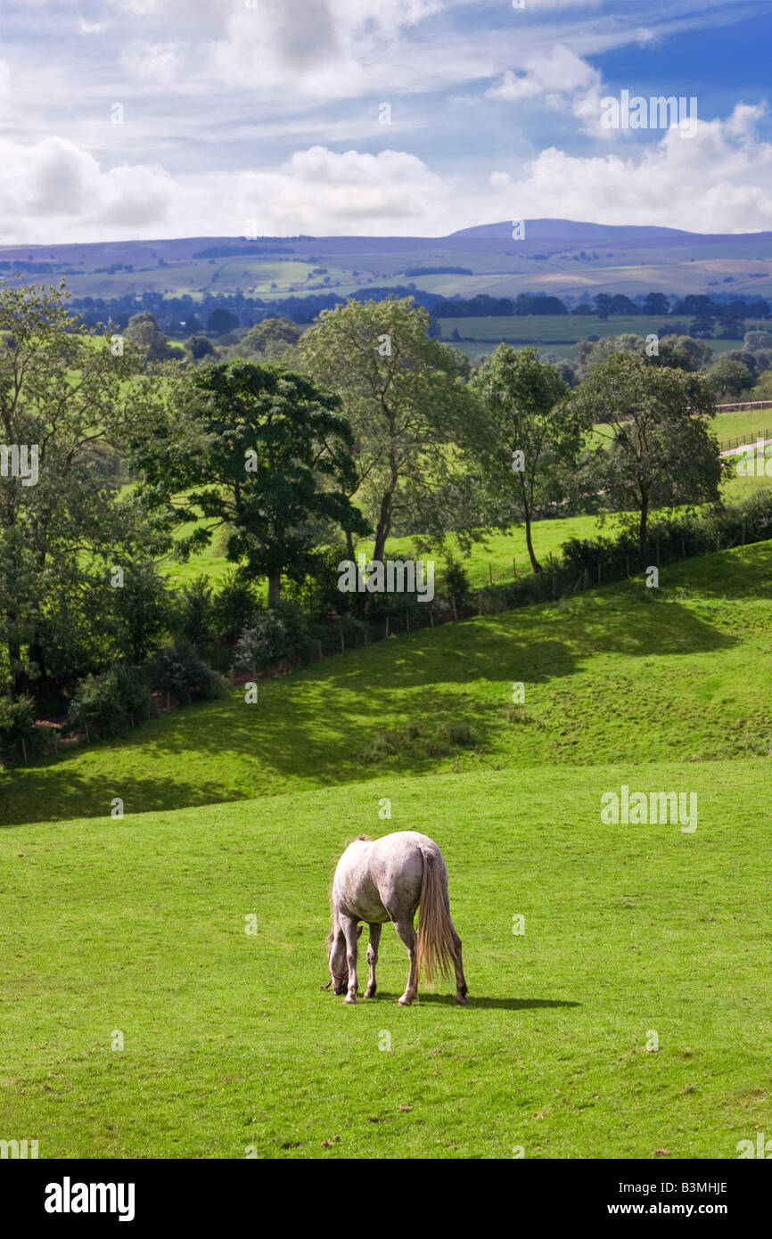 Teesdale countryside looking into the border with North Yorkshire, England, UK - Stock Image