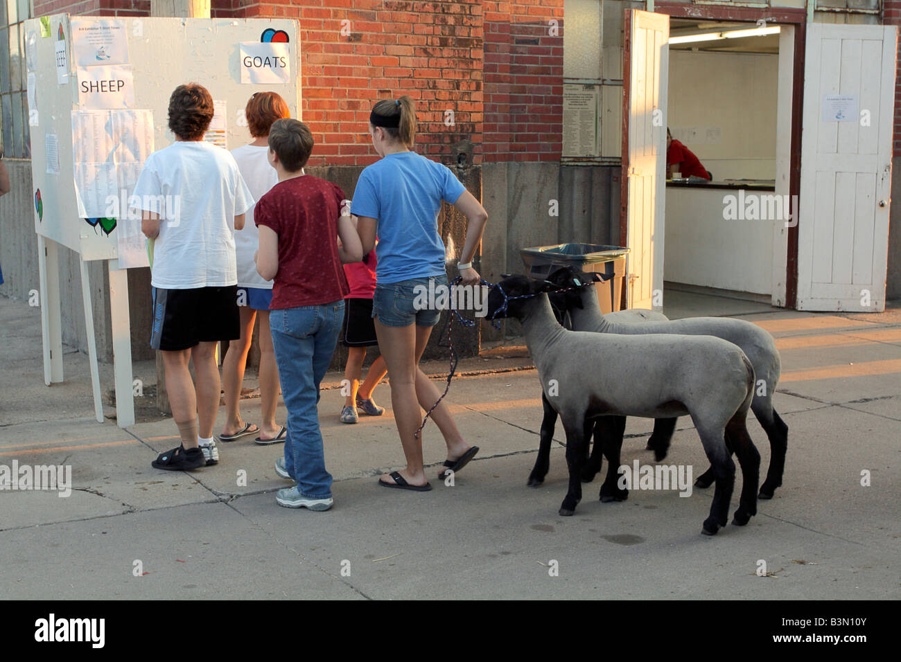 Queued for results, livestock contestants with sheep examine lists of winners. Nebraska State Fair, Lincoln, NE - Stock Image