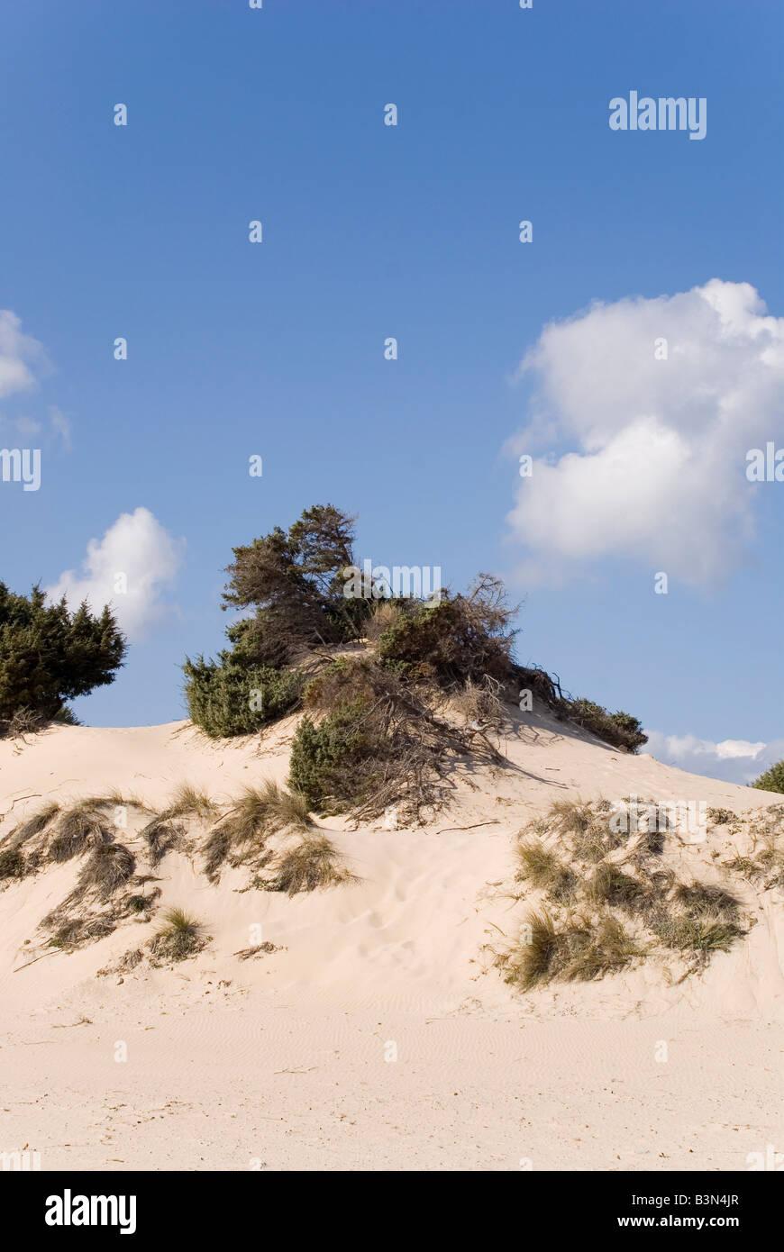 Italy, Sardinia, Sand dunes and grass - Stock Image