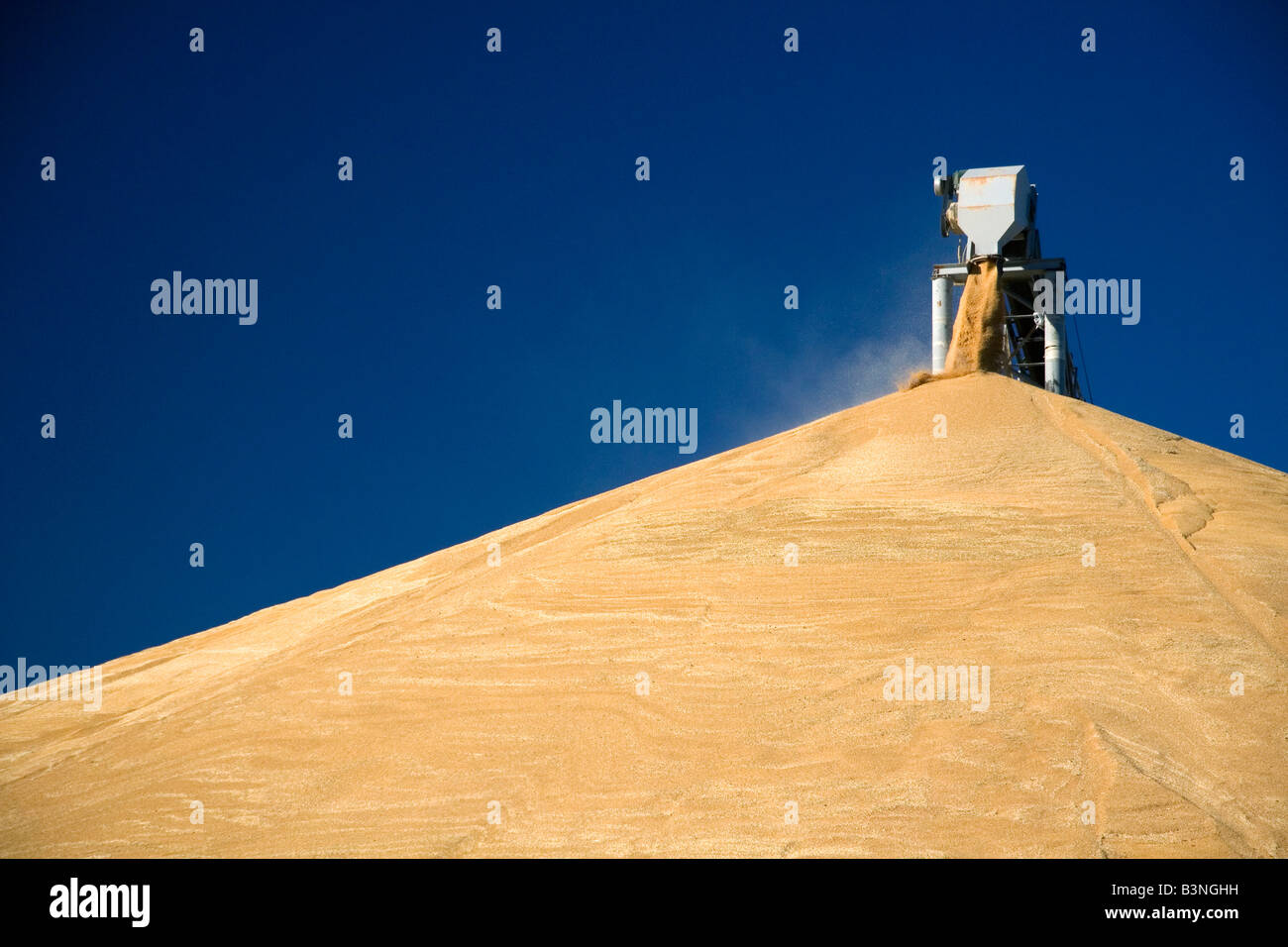 Large pile of harvested wheat at Pasco Washington - Stock Image