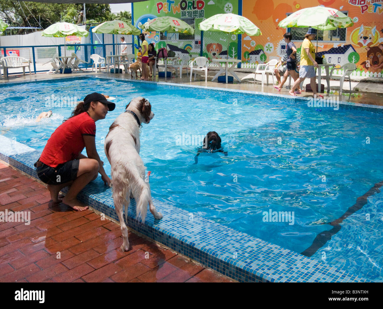 A swimming pool for dogs only at Petworld, an animal ...