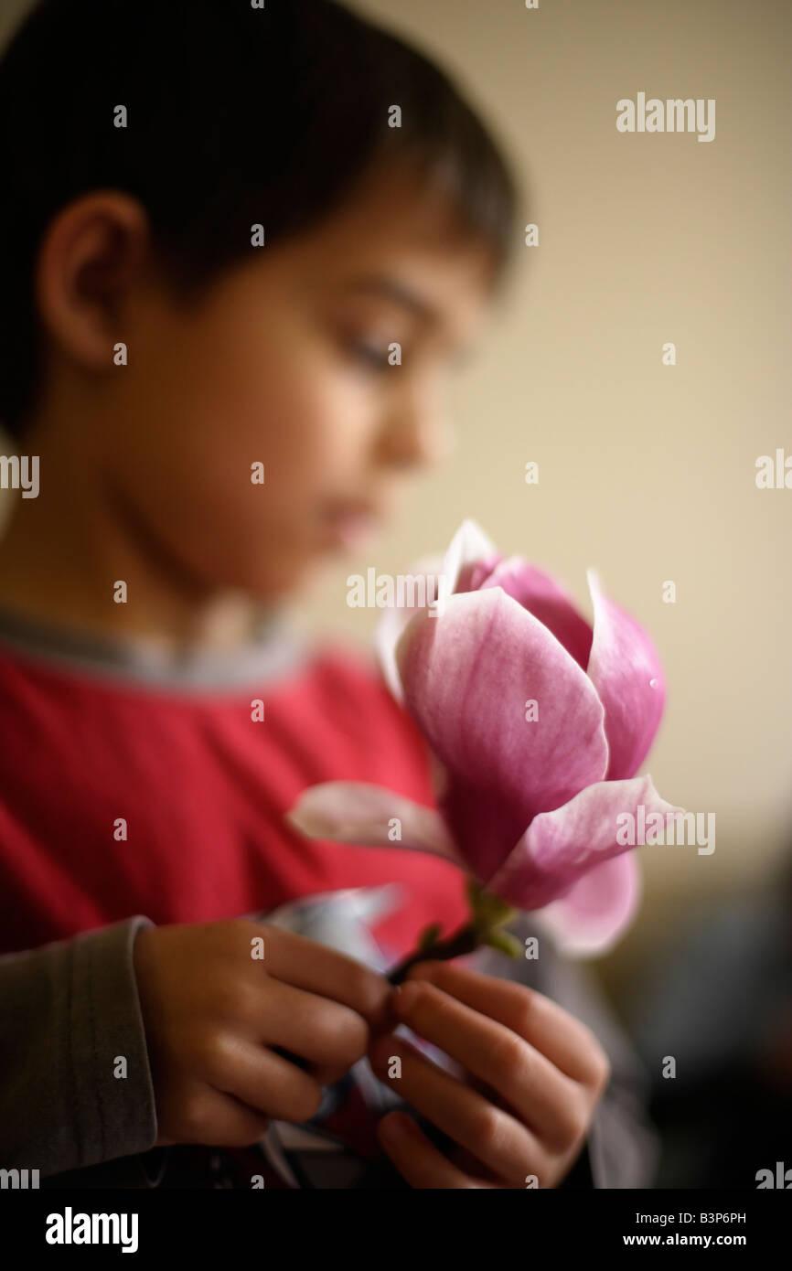 Child holds Magnolia flower - Stock Image
